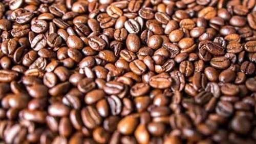 Biji-kopi-terbaik-indonesia